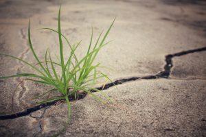 grass in concrete cracks